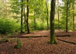 Właściwości lecznicze drzew